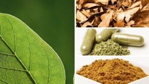 Pharmacology of Kratom