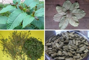 Kratom-Effects