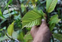 White Maeng Da Kratom Review: Effects and Dosage