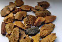 Akuamma Seeds dosage