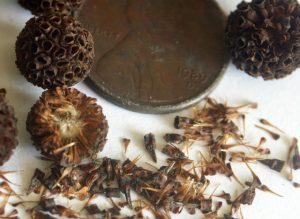 Akuamma Seeds