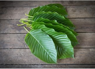kratom legalization plant