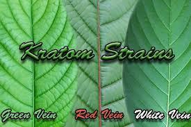 Kratom Strains