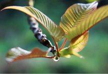 Supplements To Get Rid of Kratom and Opiate Withdrawal Symptoms