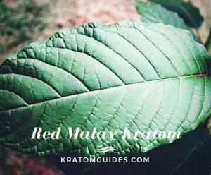 Red Malay Kratom
