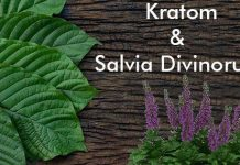 salvia divinorum and kratom