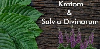 salvia divinorum and kratom