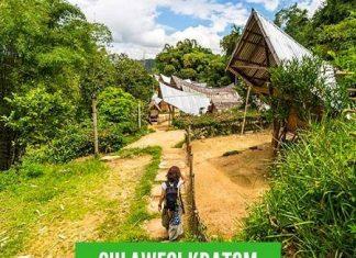 Sulawesi Kratom