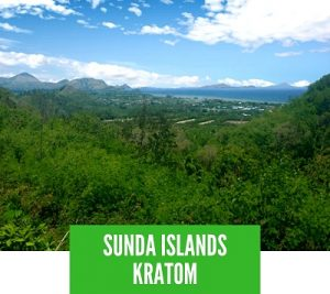 Sunda Islands Kratom