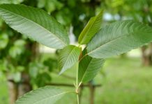 How much does Kratom Cost at a Head Shop? - Kratom Guides