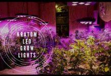 Kratom Plants