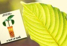A Leaf Of Faith