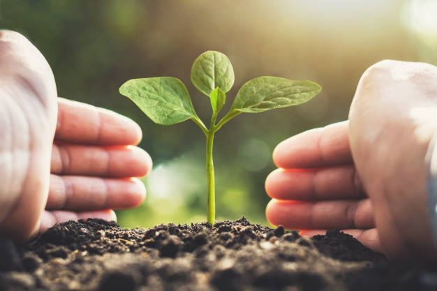 Growing Kratom and Marijuana
