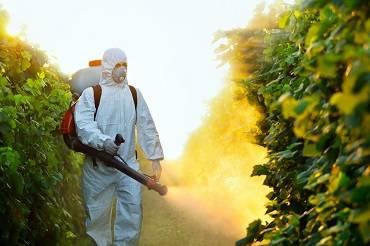 Pest control on Kratom and CBD