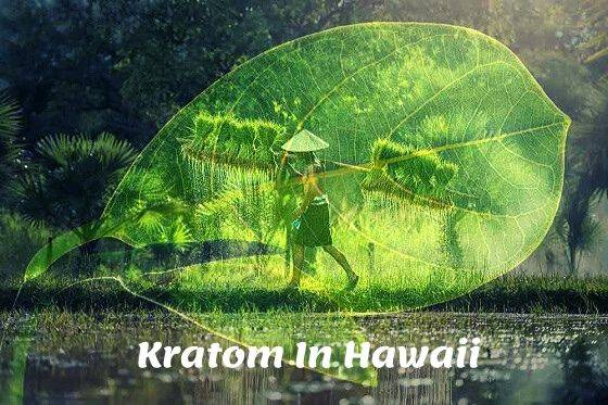 Kratom In Hawaii